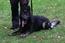 Bruno vom Flusenpark