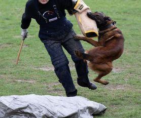 Orak Marshall Dogs