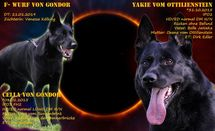 F- Wurf von Gondor: Cella von Gondor & Yakie vom Ottilienstein