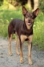 Kip Doakimo Dog