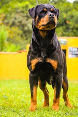 Ilka Brutus Black Champion