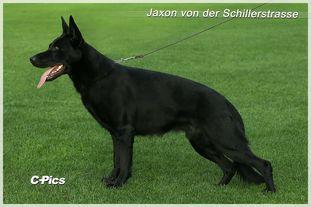 Jaxon von der Schillerstraße