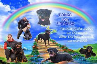Donka vom Findberg