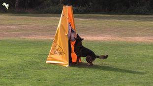Bolt Palomino Bonito
