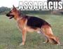 Geri of Assaracus
