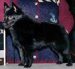 Foxnoir Wyndsong