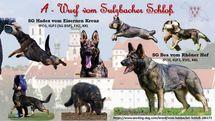 A Wurf vom Sulzbacher Schloß