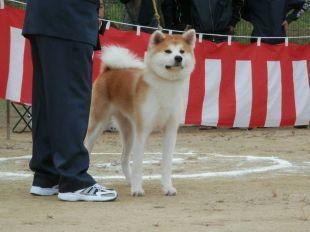 Tomoka Go Nagata Kensha