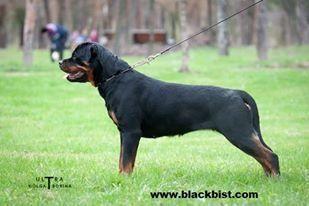 Haus Black Bist Slava from Milleron