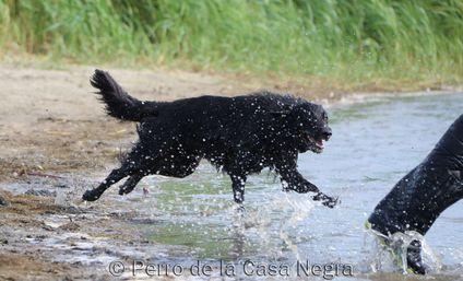 Evita Perro de la Casa Negra