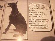 Aquila vom Heiligenwald