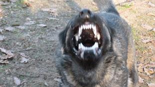 Fox vom Bullerjahn