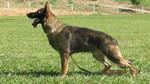 Hakker do Caio Work Dog's