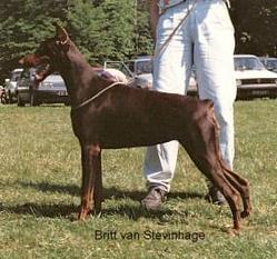 Britt van Stevinhage