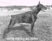 Bryan von der Wolfshöhe