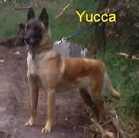 Yucca vom Schloss Neuhorst