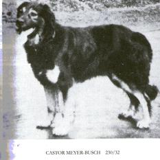 Castor (Meyer-Busch)