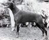 Doberhill Black Winston