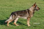 Borka Kati-vlci mak