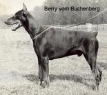 Berry vom Buchenberg
