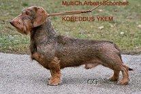 Kobeddus Ykem