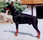 Xiko van het Wantij