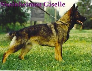 Sissinheimon Giselle