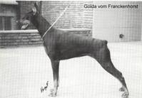 Golda vom Franckenhorst