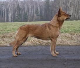 Yootshenca Astra Canina