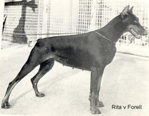 Rita von Forell