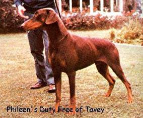 Phileen Duty Free of Tavey