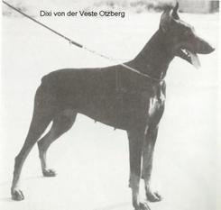 Dixi von der Veste Otzberg