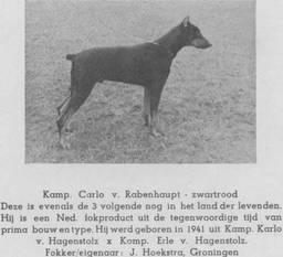 Carlo von Rabenhaupt