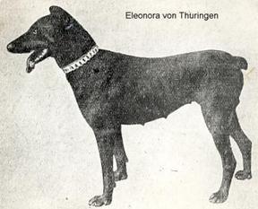 Eleonora von Thüringen