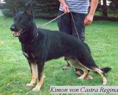 Kimon von Castra Regina