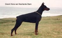 Gravin Nora van Neerlands Stam