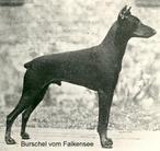 Burschel van Falkensee