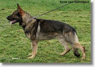 Xyrus vom Salztalblick