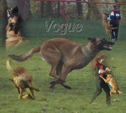 Vogue LOF 60813 (Dorlatos)