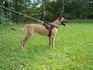Imani Running Wild