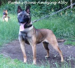 Puma's Home Amazing Abby