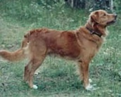 Rödahunds And Ivar