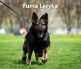 Yuma Leryka