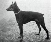 Casso von Kleinwaldheim