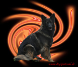 Dark Lobo's Abigail