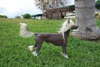 Solaris Proud Pony 4-reil Devon