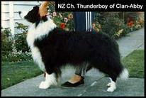 Thunderboy of Clan-Abby
