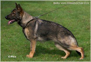 Bella vom Dreisbacher-Eck