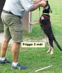 Leinbo's Frigga