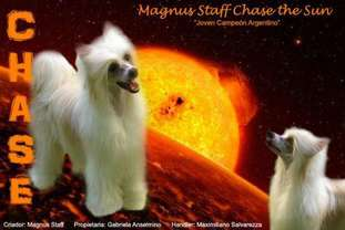 Ch Grch Magnus Staff Chase The Sun